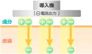 electroporation_img01